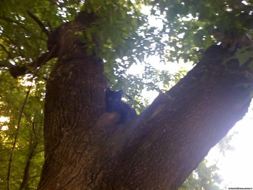 Цезарь на дереве