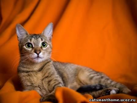 Офелия, фотоальбом
